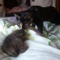 またまた子猫を保護