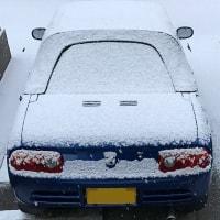 うわぁ!  雪だ!!!