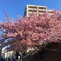 空桜・・・「あざみ野」