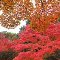 万博の秋・・・3