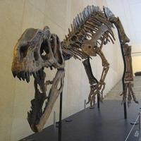 水田記念博物館化石ギャラリー