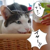 カゴとネコ