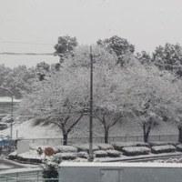 雪だ! 雪だ!