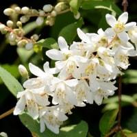 旧暦の卯月に咲く花