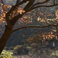 12月4日の泉自然公園