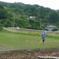 自然菜園スクール(自然稲作/発酵コース)除草と抑草