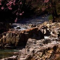 日光市 黒川沿い山中の桜 29.4.20