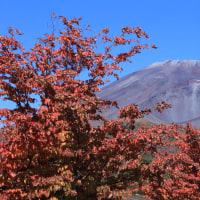 富士山 初冠雪 ⇒ パート2 紅葉×黄葉の彩合戦場