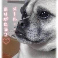 昨日は犬洗い日でした