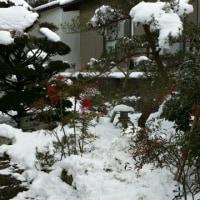 実家の雪が気になって。