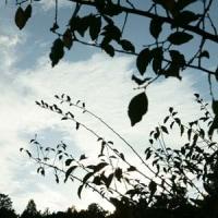 10月の中日 10月16日(日)曇り