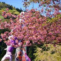 八重桜咲くころ