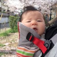 初桜ショット