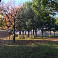 晩秋の健康福祉村