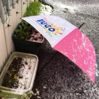 ルッコラ栽培日記:雪の日のルッコラさん