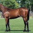 シルク17年度募集馬:申し込み馬決定♪♪