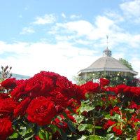 青い空、赤い薔薇。