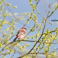 春らしく 3