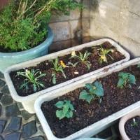 孫と一緒に門の周りの草花用とプランター菜園用の土づくり