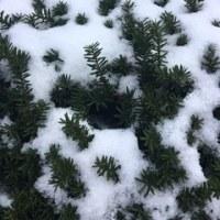 大雪の日に・・・