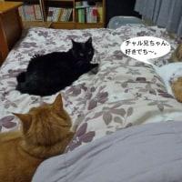 ベッドの上は、にぎやか