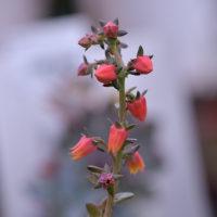 お花さん(2)