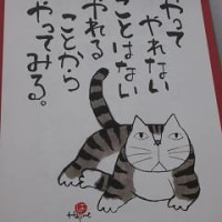 岡本 肇さんの猫は可愛い