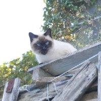 活動する外猫の様子、3匹減り、2匹増えました、、、。