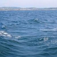昨日は湾フグ釣りでしたが、、、。