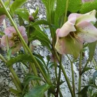 花が咲き始めました(2)