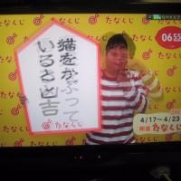 桜燕日記 Apr. 17, 2017