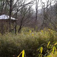 【散歩】加東市 やしろの森公園
