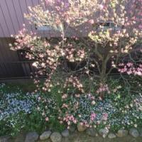 春を感じ…
