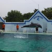 『しながわ水族館』はアットホームな水族館でした