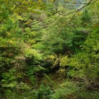 小雨の済浄坊渓谷
