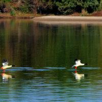 「大河の水鳥」