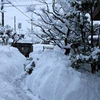 大寒波襲来で雪かき三昧の一日