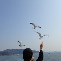 ドライブ 3 南房総~東京湾🚢