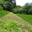 今までにない、暑い夏、田んぼの畦の草刈りをする