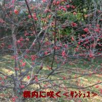 奈良の写真史を語る人物像…(^O^)