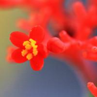 小さな小さな小さな花