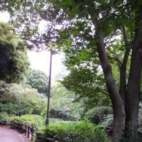 和田堀池の鳥
