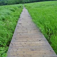 くじゅう 雨ヶ池 6月24日
