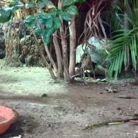 iZOO見て!ふれて!おどろく!体感型動物園♪トカゲ&カメ