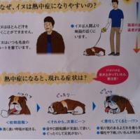 どんなに暑くても、愛犬は脱げません。