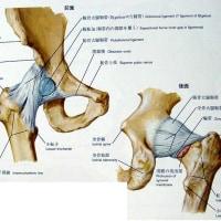 股関節痛。
