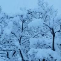 本格的な雪景色です(笑える短歌2首)