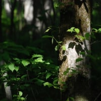 森の陽だまり