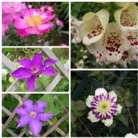 2010529花の美術館