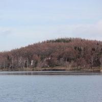 長野県北佐久郡立科町の女神湖では、ザゼンソウが花を咲かせています